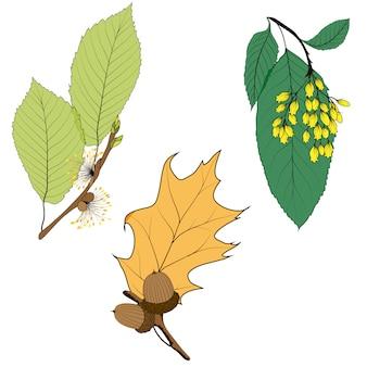 Conjunto de doce hojas de otoño diferentes aisladas sobre fondo blanco.