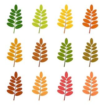 Conjunto de doce hojas de otoño en diferentes colores otoñales. ilustración vectorial.