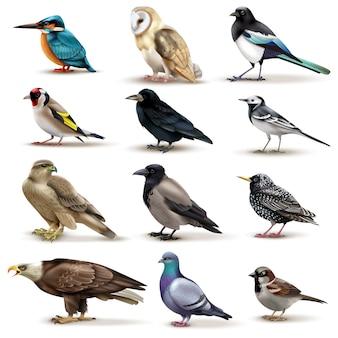 Conjunto de doce imágenes aisladas de pájaros coloridos con diferentes especies en blanco