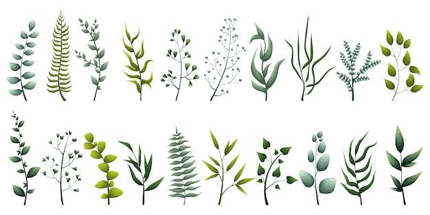 Conjunto de elegantes hierbas verdes, hojas tropicales, plantas frondosas
