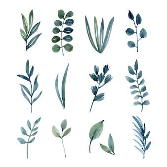 Conjunto de elementos de acuarela de hojas pintadas a mano de flores exuberantes.