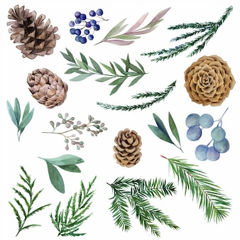 Conjunto de elementos botánicos acuarelas de invierno, abeto y conos