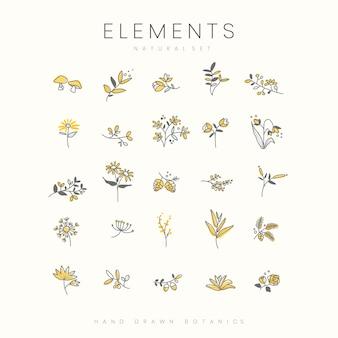 Conjunto de elementos botánicos dibujados a mano.