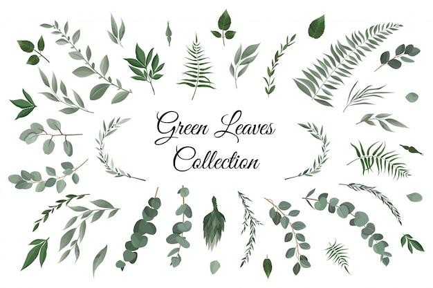 Conjunto de elementos colección de hojas verdes