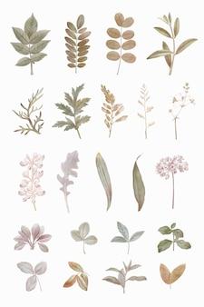 Conjunto de elementos de diseño de follaje