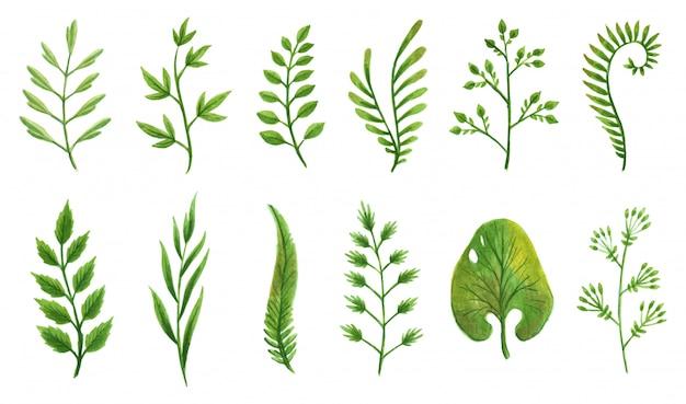 Conjunto de elementos de diseño vectorial colección de vegetación verde arte follaje natural hojas hierbas en estilo acuarela