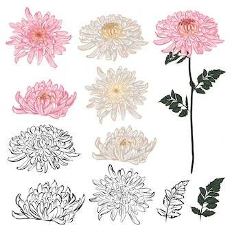 Conjunto de elementos de flor de crisantemo en diseño. estilo japonés en estado de ánimo dibujado a mano