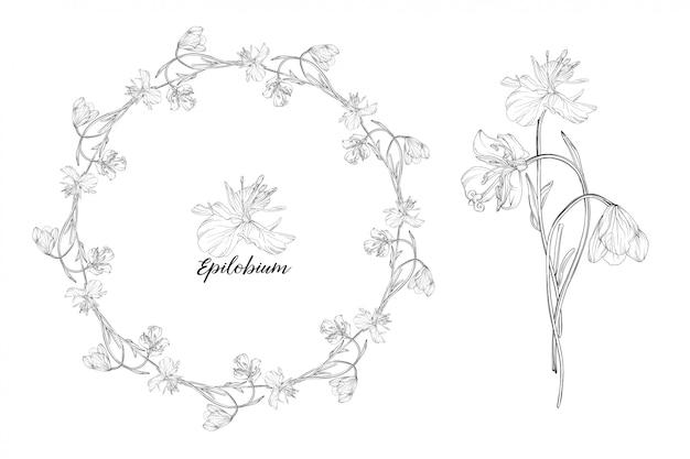 Conjunto de elementos florales epilobium