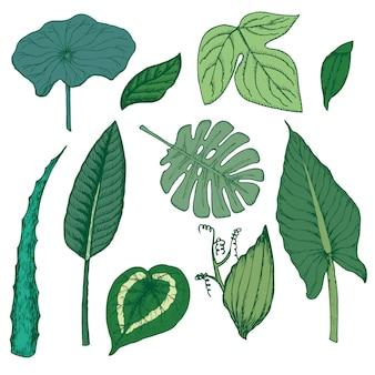Conjunto de elementos florales exóticos de dibujo coloreado