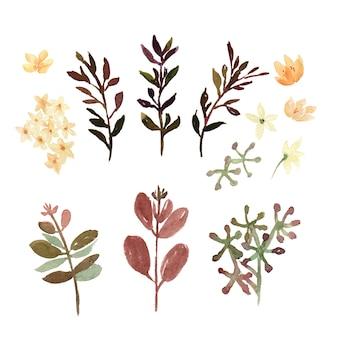 Conjunto de elementos florales y hojas de acuarela.