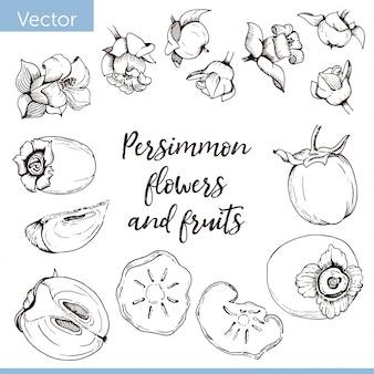 Conjunto de elementos. flores de caqui y frutas. dibujo grafico monocromo