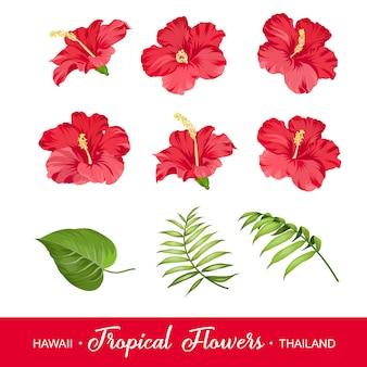 Conjunto de elementos de flores tropicales