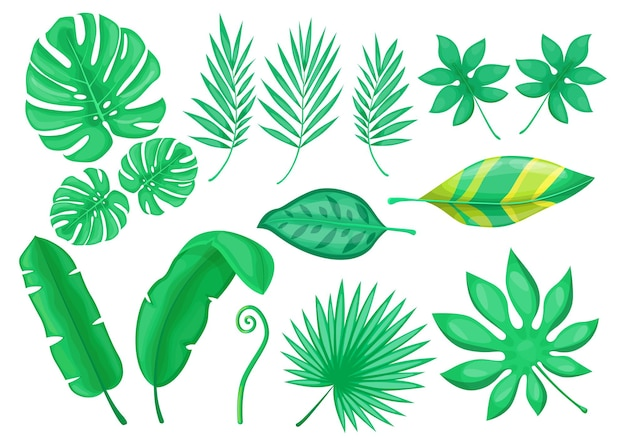 Conjunto de elementos planos de follaje exótico verde