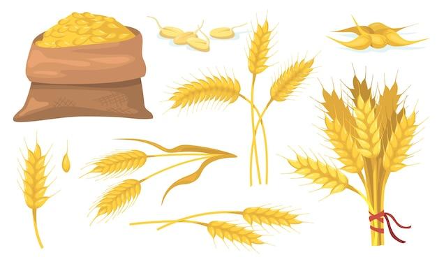 Conjunto de elementos planos de racimo de trigo maduro amarillo, espigas y granos.