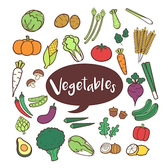 Conjunto de elementos vegetales en garabatos dibujados a mano.