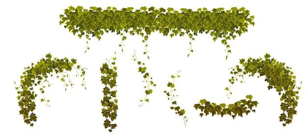 Conjunto de enredaderas de hiedra con hojas de plantas verdes.
