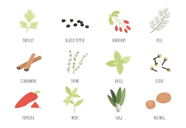 Conjunto de especias y hierbas.