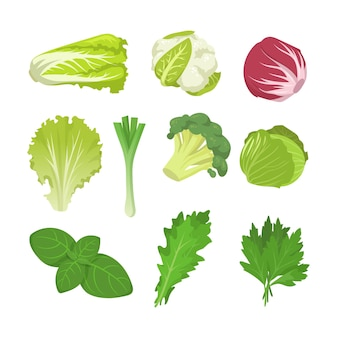 Conjunto de especies de ensalada y repollo.