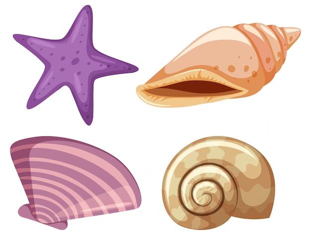 Conjunto de estrellas de mar y conchas marinas sobre fondo blanco.