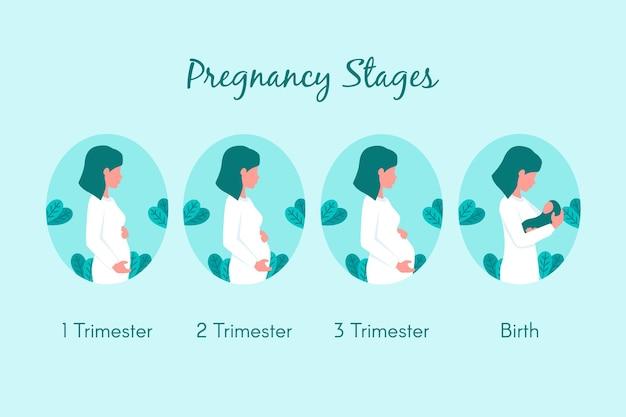 Conjunto de etapas de embarazo de diseño plano