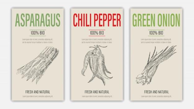 Conjunto de etiqueta de plantilla con espárragos, papel de chile y cebolla verde en estilo retro vintage dibujado a mano o boceto.
