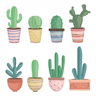 Conjunto de exóticas plantas de cactus en macetas de cerámica.