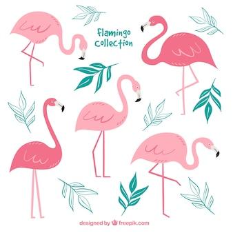 Conjunto de flamencos rosa con posturas diferentes