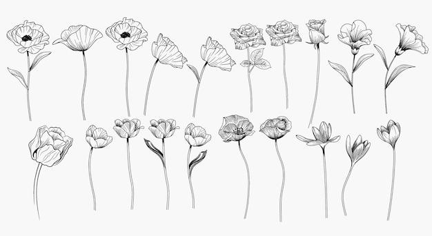 Conjunto de flor de dibujo a mano.