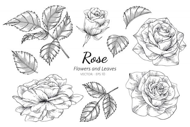 Conjunto de flor rosa dibujo ilustración con arte lineal.