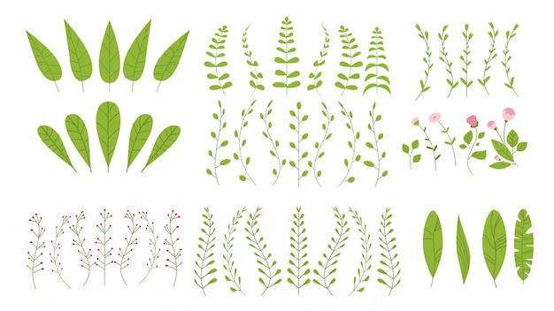 Conjunto floral botánico plantas verdes ramas con hojas colección de hierbas realistas horizontal