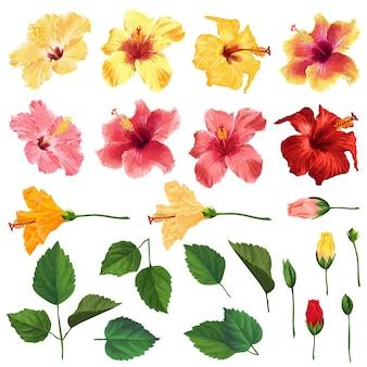 Conjunto floral de hibisco con flores, hojas y ramas. acuarela dibujada a mano