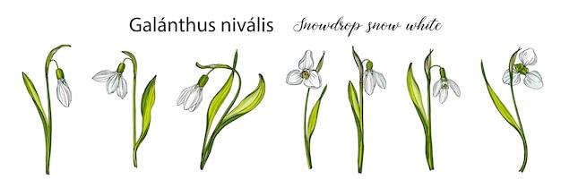 Conjunto floral vector con flores de campanillas.