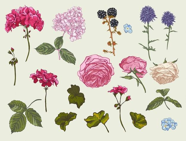 Conjunto floral vintage de elementos naturales.