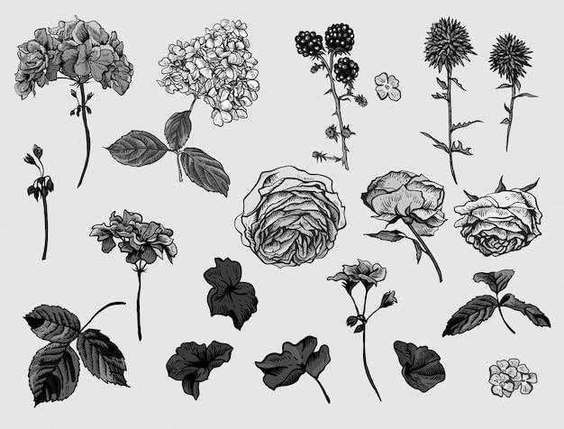 Conjunto floral vintage monocromo de elementos naturales.