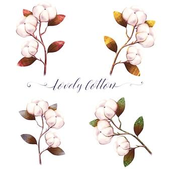 Conjunto de flores de algodón acuarela