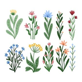 Conjunto de flores bonitas dibujadas a mano