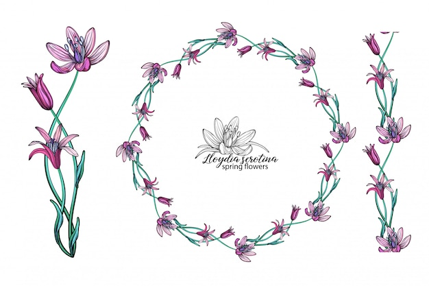 Conjunto de flores de color rosa. guirnalda. ramo de flores. flores de primavera