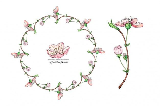 Conjunto de flores con delicadas flores, rama floreciente