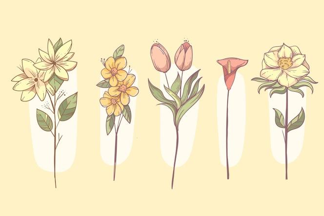 Conjunto de flores dibujadas a mano