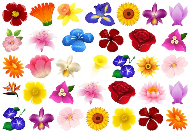 Conjunto de flores diferentes