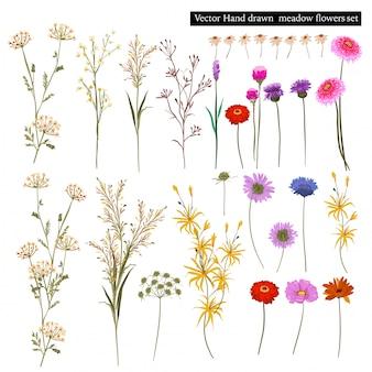 Conjunto de flores hermosas praderas en flor, y plantas botánicas aisladas. ilustración de vector de estilo dibujado a mano