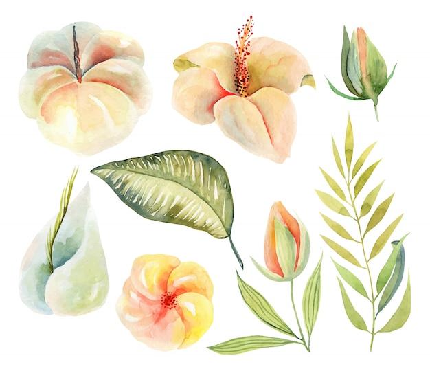 Conjunto de flores de hibisco acuarela y plantas y hojas verdes tropicales, ilustración aislada pintada a mano