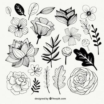 Conjunto de flores y hojas dibujadas a mano