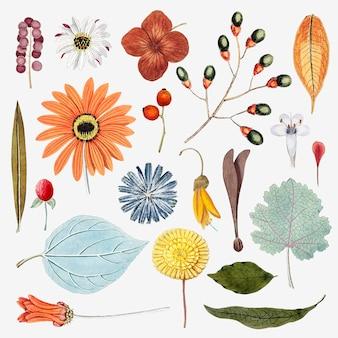 Conjunto de flores y hojas mixtas