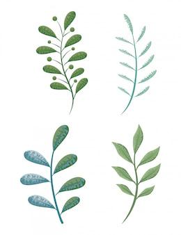 Conjunto de flores y hojas y plantas.