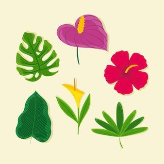 Conjunto de flores y hojas tropicales