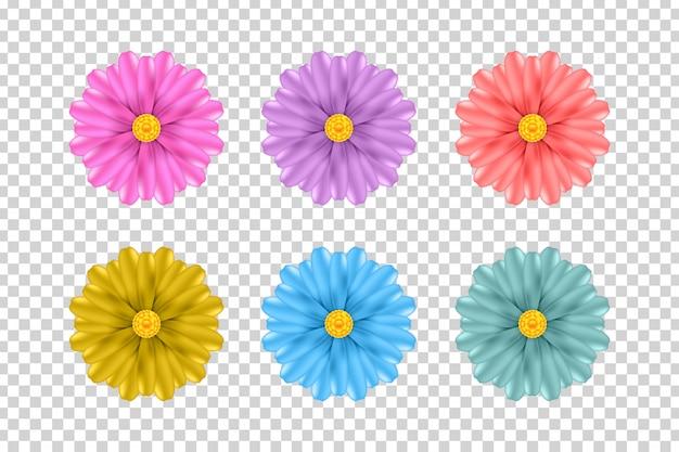 Conjunto de flores realistas para decoración y revestimiento en el fondo transparente.