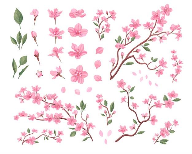 Conjunto de flores de sakura