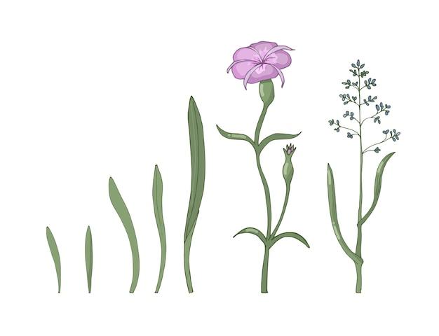 Un conjunto de flores silvestres y hierbas aisladas sobre fondo blanco. ilustración dibujada a mano.