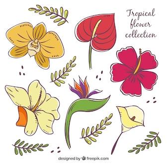 Conjunto de flores tropicales coloridas dibujadas a mano